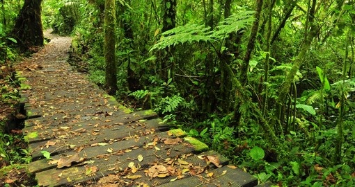 Enjoy the trails on the Monteverde Reserve while on your Costa Rica vacation