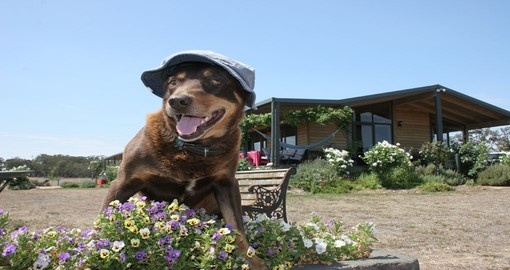 Meet some true Aussie characters on a farmstay during your Australia vacation.