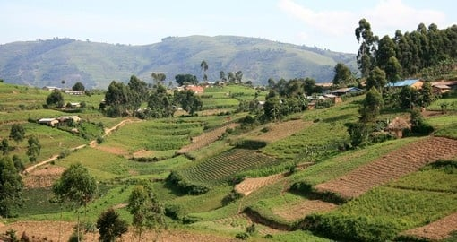 Rice fields in Kisoro district