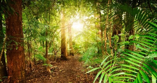 Wander around the lush Australian rainforests during your Australia Vacations.