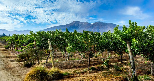 One of Chile's newer wine regions, the Casablanca Valley produces fine Chardonnay and Viognier