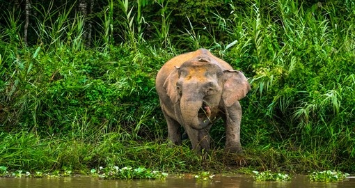 Enjoy the unique wildlife on your Malaysian vacation