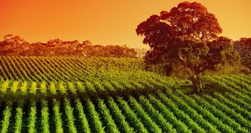 Explore the vineyards in Adelaide Hills and awaken your inner wine connoisseur on your next Australia Vacation.