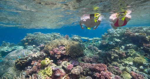 Enjoy unique marine life in the Great Barrier Reef during your Australia tour