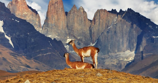 Spot local wildlife on your Chile Tour