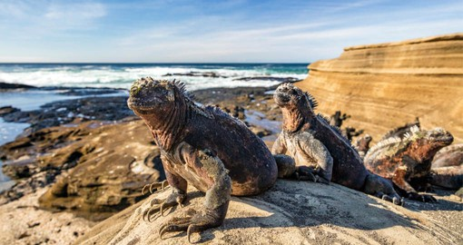 The marine iguana is the only lizard in the world with the ability to live and forage at sea