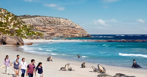 Visit the amazing Seal Bay on your next Australia vacations.