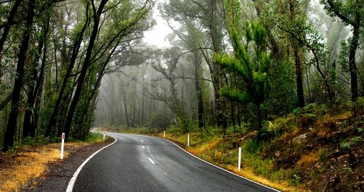 Discover Grampians Forest and wildlife in Australia.