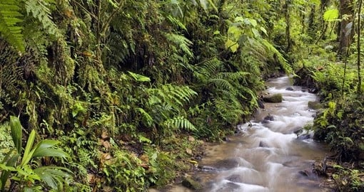 Dscover wildlife in Cloud Forest during your next trip to Ecuador.