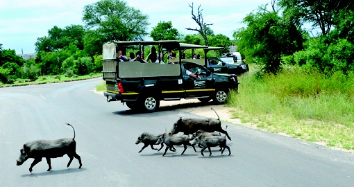 Kruger game viewing