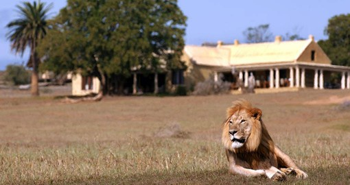 Enjoy the Big 5 including Lions n your South Africa Safari tip