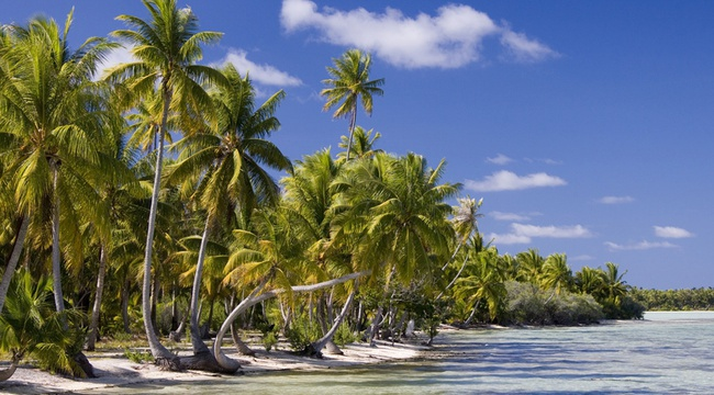 Palm trees in Cook Islands