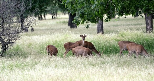 Deer herd in Casela park