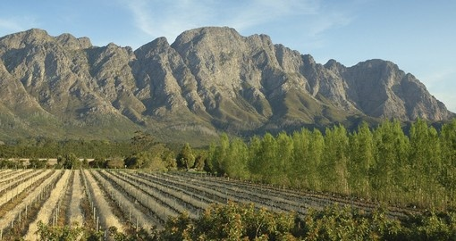 Stroll the hotel's vineyards on your South African tour