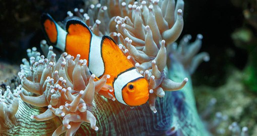 The Great Barrier Reef contains an abundance of marine life and comprises of over 3000 individual reef systems