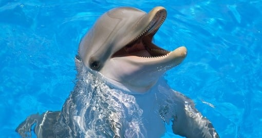 Experience and swim with the amazing creatures being dolphins on your next Australian Vacation