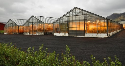 You will learn how hot spring water is used to heat up greenhouses during your Iceland trip.