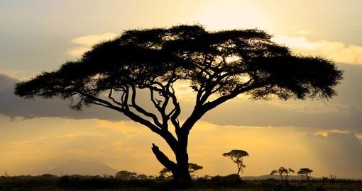 Kenya Safari Tours Amp Vacations Goway Travel