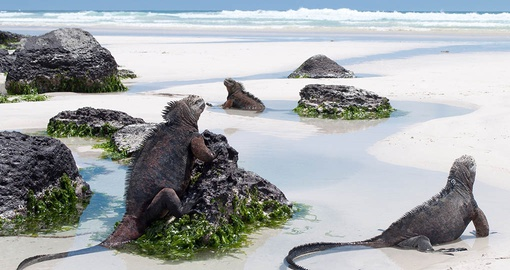 Enjoy wildlife spotting on your Galapagos cruise