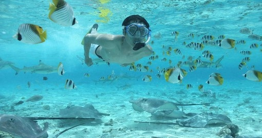 One of the best ways to experience Bora Bora is underwater during your Trip to Bora Bora