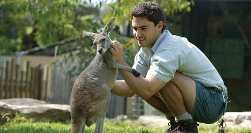 You can experience interaction with wildlife during your next Trip to Australia.