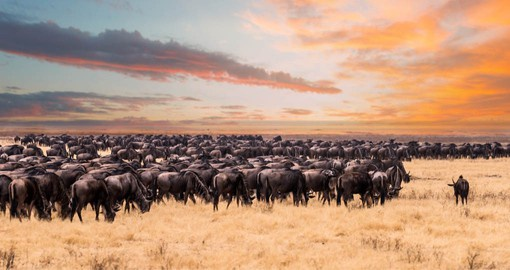 The great Migration of the Serengeti is considered one of 'The Ten Wonders of The Natural World'