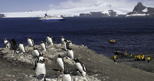 Land on the shores of the Antarctic by small boat from the cruise ship and experience local wildlife on your Trip to Antarctica