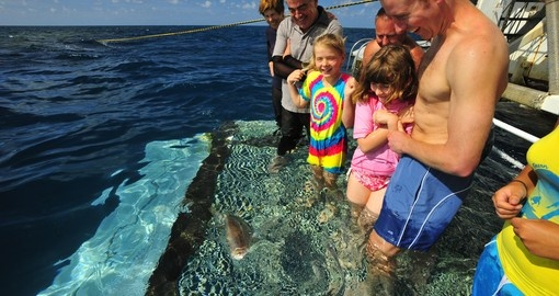 Discover fish feeding on the Great Barrier Reef on your next Australia tours.
