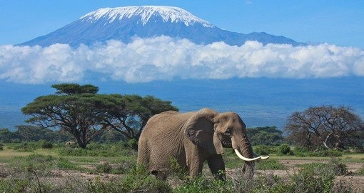 A large adult elephant with snow covered Mount Kilimanjaro in the background makes for a great photo on your Tanzania safari.