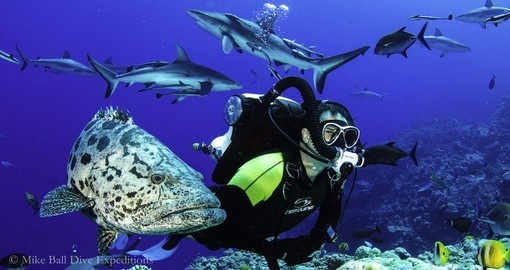 Feed sharks in the Great Barrier Reef during your Australia trip.