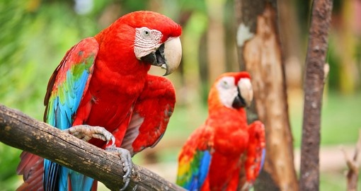 Hang out with colourful macaw's on your El Salvador Vacation