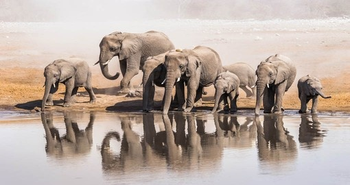Watch Elephants at a waterhole in Etosha National Park on your next trip to Namibia.