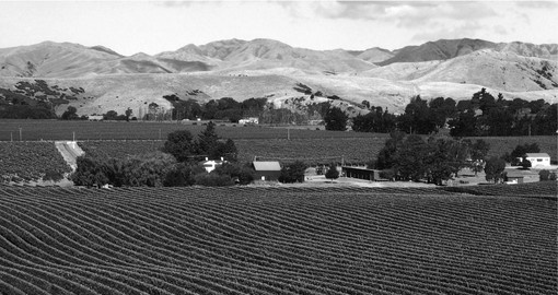 Blenheim is a major grape growing area and is an ideal inclusion to your New Zealand vacation.