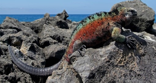 Learn about the unique wildlife on your Ecuador Vacation