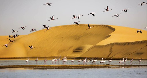 Sheltered by the Pelican Point sand spit, Walvis Bay's tidal lagoon is home to abundant marine and birdlife