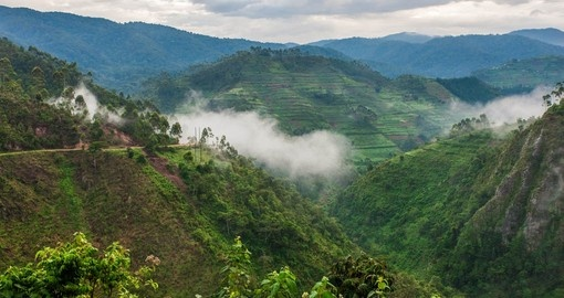 Your Uganda Tour begins in the Bwindi Impenetrable Forest is one of the most biologically diverse areas on Earth