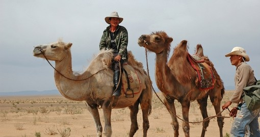 Men with their camels in the Gobi Desert