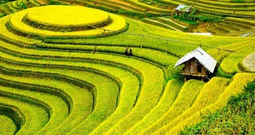Birdseye view of rice fields in Vietnam