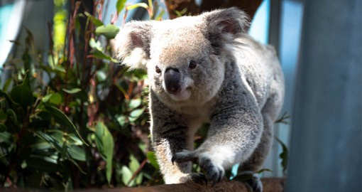 Taronga Zoo cares for over 4000 animals including Australia's unique Marsupials