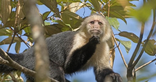 See a wide variety of wildlife on your Costa Rica tour