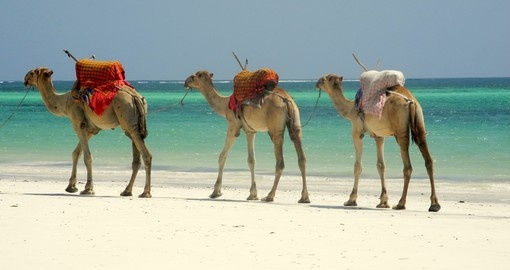 Spend a few nights on the beach at Mombasa during your Kenya vacaction