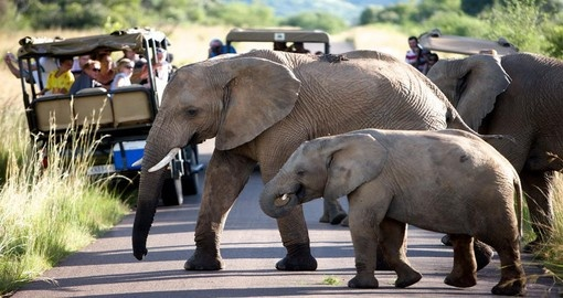 This South Africa trip to Shepherd's Tree Game Lodge offers a variety of activities to see Elephants and other wildlife.