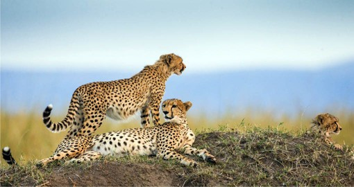 Famed for it's massive annual migration, The Serengeti is one of the oldest ecosystems on earth
