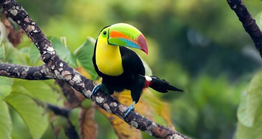 See toucans and other wildlife on your trip to Panama