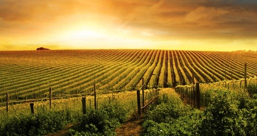 Beautiful sunset over a vineyard