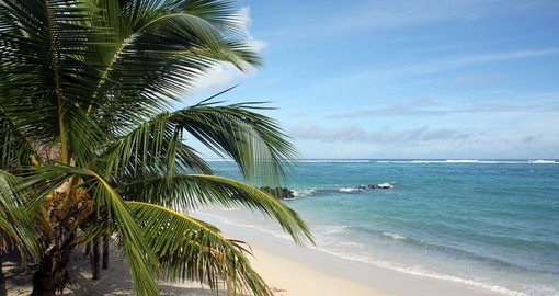 Palm trees on the white sand beach