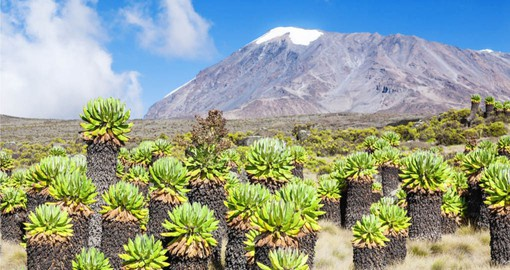 Your Tanzania vacation reaches the Uhuru Peak, Africa's highest.