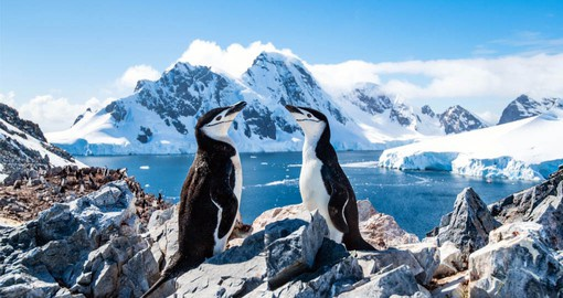 Antarctica is the coldest, windiest and driest continent. It contains 90 percent of all of the ice on Earth