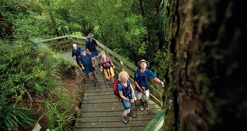Go on the adventure trek known as the Tuahu Kauri Walk during your New Zealand Vacations.