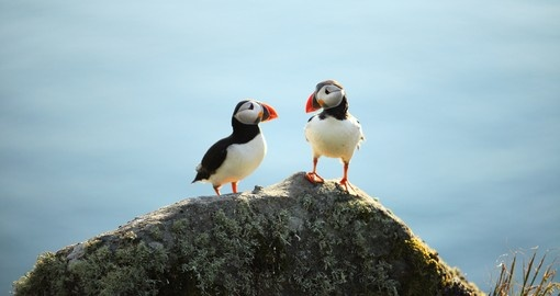 Puffins are some of the various wildlife you can see throughout your vacation in Norway